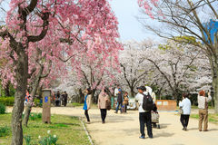 Wiosna w Osaka Zdjęcia Royalty Free