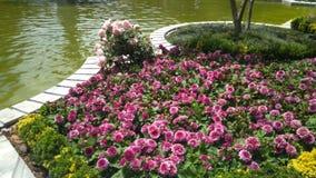 Wiosna w pałac zdjęcia stock