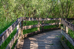Wiosna w parku Obraz Royalty Free