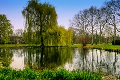 Wiosna w parku zdjęcie royalty free