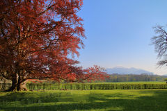 Wiosna w parku w pogórzach Obraz Royalty Free