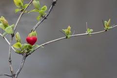 Wiosna w sercu Fotografia Stock