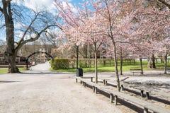 Wiosna w Szwecja Fotografia Stock