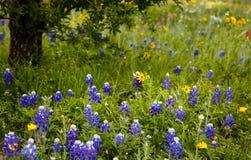 Wiosna w Teksas Zdjęcia Royalty Free