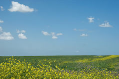 wiosna w terenie Obrazy Royalty Free