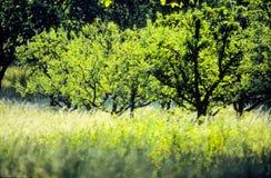 wiosna w terenie Fotografia Royalty Free