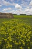 wiosna w terenie obraz stock