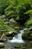 Wiosna w Tremont przy Great Smoky Mountains parkiem narodowym, TN usa Obraz Stock