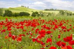 Wiosna w Tuscany Obraz Royalty Free