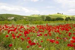 Wiosna w Tuscany Fotografia Royalty Free