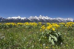 Wiosna w Uroczystym Teton parku narodowym Obraz Stock
