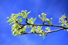 Wiosna w Vilnius miasta Karoliniskes mieszkaniowym okręgu Zdjęcie Royalty Free