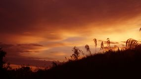 Wiosna wczesnego poranku wschód słońca w waikato okręgu Nowa Zelandia obraz royalty free
