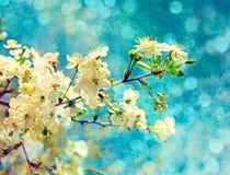 Wiosna wiśni kwiaty Zdjęcia Stock