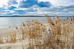 Wiosna wiatr rusza się suchej trzciny na brzeg rzeki Zdjęcia Stock