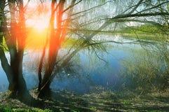 Wiosna widok z wierzbą pod światłem słonecznym Obrazy Royalty Free
