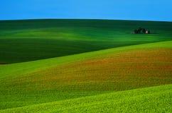 Wiosna wiejski krajobraz Obraz Stock