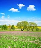 Wiosna wiejski krajobraz z kwitnącym maczka polem zdjęcie royalty free