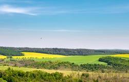Wiosna wiejski krajobraz z polami, niebieskim niebem i ptakiem, Fotografia Stock