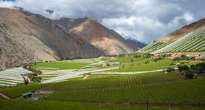 Wiosna winnica Elqui doliny, Andes część Atacama Obraz Royalty Free
