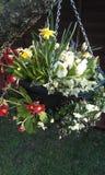 Wiosna wiszący kosz Zdjęcia Royalty Free