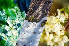 Wiosna wizerunki zdjęcie stock