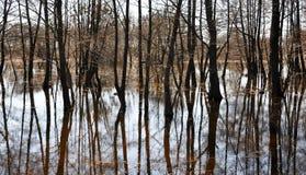 Wiosna wylew rzeka Drzewa r dobrze z wody Drzewa odbijający w rzece Zdjęcie Stock