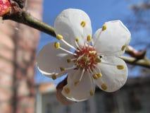 Wiosna wzrastał kwiaty w ogródzie Obrazy Royalty Free