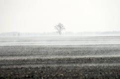 Wiosna wzrasta odparowywanie woda od grunt orny tworzący mgłę nad polem obraz royalty free