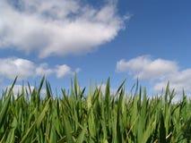 wiosna wzrostu zdjęcie stock