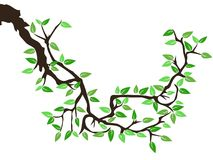 wiosna zielony drzewo Zdjęcia Royalty Free
