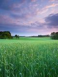 Wiosna zmierzchu krajobraz Zdjęcia Royalty Free