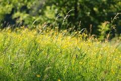 Wiosny łąka Zdjęcia Stock