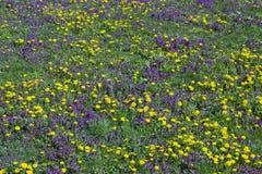 Wiosny łąka zdjęcie royalty free