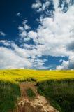 Wiosny łąka Zdjęcia Royalty Free