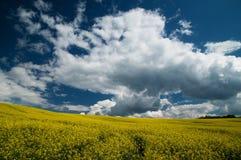 Wiosny łąka Obraz Stock