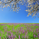 Wiosny łąka Fotografia Royalty Free