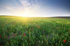 Wiosny łąka fotografia stock
