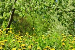 Wiosny łąka jpg fotografia stock