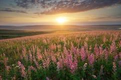 Wiosny łąka kwiaty zdjęcie royalty free
