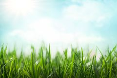 Wiosny łąki tło Obrazy Royalty Free