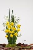 Wiosny żarówki kwiaty Zdjęcie Royalty Free