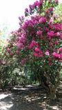 Wiosny alei i drzewa czerni piękny park, Zjednoczone Królestwo Fotografia Stock