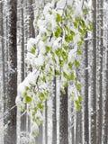 Wiosny anomalia zdjęcia stock