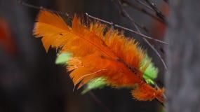 Wiosny barwiący piórka Zdjęcie Stock