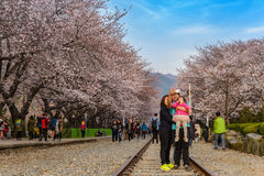 Wiosny Czereśniowego okwitnięcia festiwal, Jinhae, Południowy Korea Fotografia Royalty Free