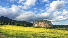 Wiosny czerwieni kolor żółty i kamień kwitniemy wokoło! Zdjęcie Stock