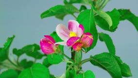 Wiosny czerwieni kwiaty zdjęcie wideo