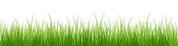 Wiosny czuła trawa, odizolowywająca na białym tle bez cienia Szeroka trawy granica Obrazy Royalty Free