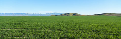 Wiosny dolina, antylopy dolina, Kalifornia Fotografia Stock